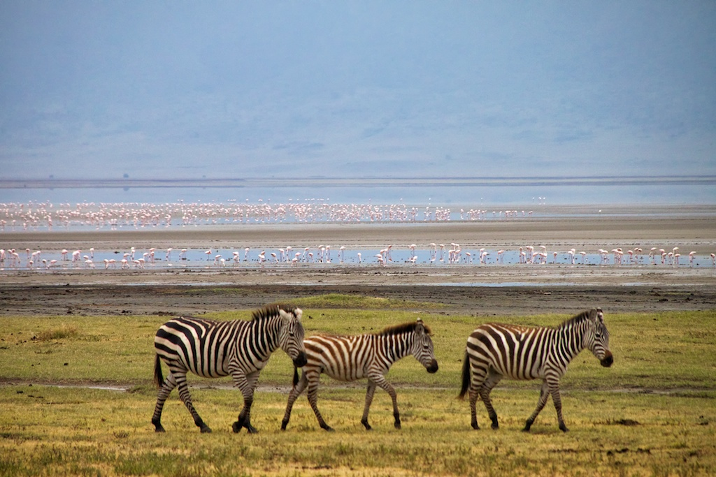 Lake Manyara and Ngorongroro