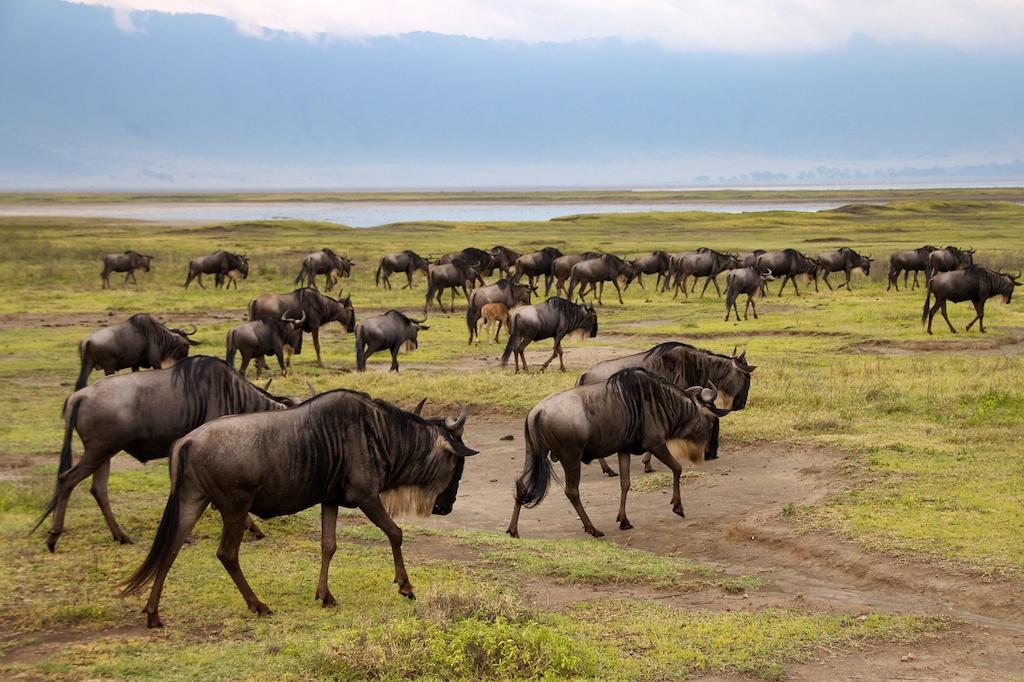 Tanzania (2011)