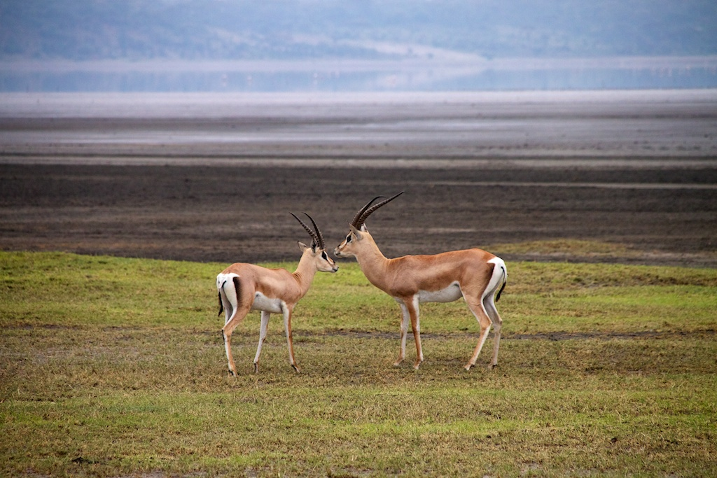 Ndutu, South Serengeti