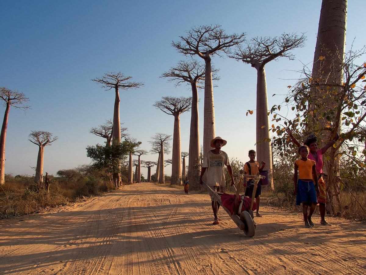 Kirindy and Allée des baobabs