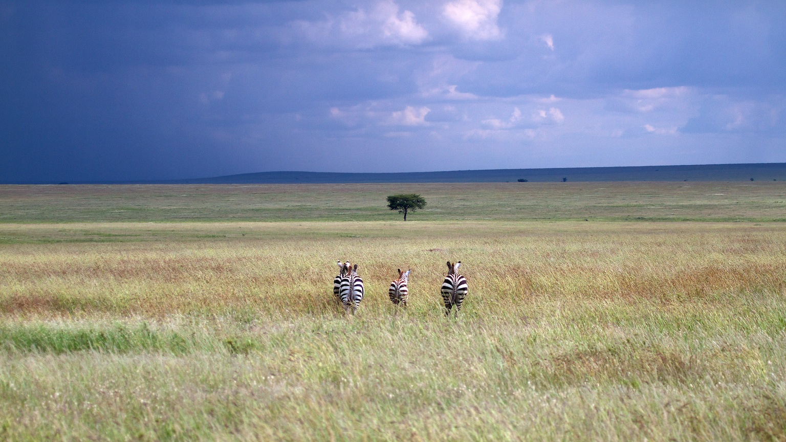 Serengeti, the endless plains
