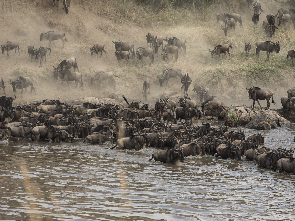 Serengeti, the Crossing
