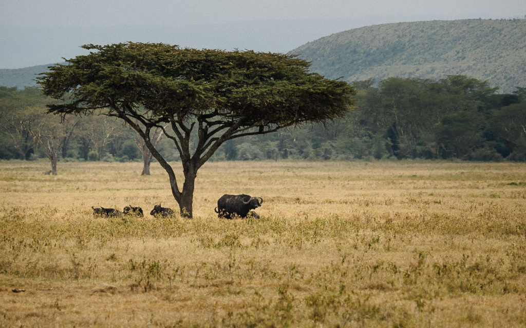 One Day Safari in Kenya