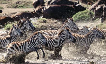 Serengeti 2016